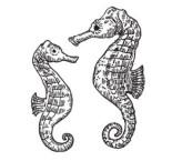 lynn seahorse